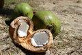 Coconut cut ​​fresh with two whole coconuts in the background Royalty Free Stock Photography