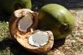 Coconut cut ​​fresh with two whole coconuts in the background Royalty Free Stock Photos