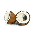 Coconut cut in half on white background Royalty Free Stock Photos