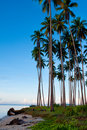 Coconut grove tropical island Royalty Free Stock Photos