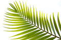 Coconut leaves can be made very many Royalty Free Stock Photos