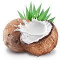 Coconut with milk splash inside. Royalty Free Stock Photo