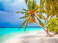 Coconut palm beach Royalty Free Stock Photo