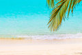 Coconut palm leafs in front of dreamy beach at an island in Mald Royalty Free Stock Photo