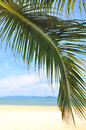 Coconut palm leaves and tropical beach background Royalty Free Stock Photo