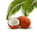 Coconut with palm leaves.
