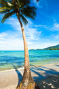 Coconut palm on sand beach in tropic Stock Photography