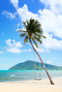 Coconut palm with swings on the beach Royalty Free Stock Photos