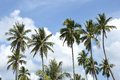 Coconut palm tree agaist blue sky Royalty Free Stock Photography