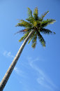 Coconut palm tree agaist blue sky Stock Photography