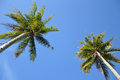 Coconut palm tree agaist blue sky Stock Photos