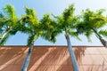 Coconut palm tree alongside the orange brick wall low angle of Royalty Free Stock Photography