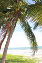 Coconut palm tree on the beach Royalty Free Stock Photos