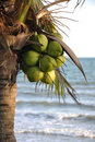 Coconut palm tree on the beach Royalty Free Stock Photography