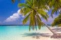 Coconut palm tree at dreamy beach Royalty Free Stock Photo