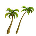 Coconut palm tree isolated on white background Stock Image