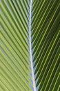 Coconut palm tree leaf Royalty Free Stock Photo