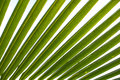Coconut palm tree leaf Royalty Free Stock Photo