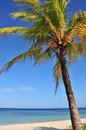 Coconut palm tree and ocean Royalty Free Stock Photo