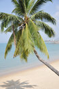 The coconut palm tree on sand beach Royalty Free Stock Photography