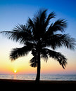 Coconut palm tree silhouetted against sunrise Stock Images