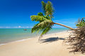 Coconut palm tree on the tropical beach Stock Photo