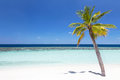 Coconut palm tree on tropical beach an empty white sand nice sunny day with few clouds photograph taken in maldives Stock Photos