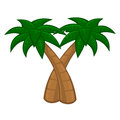Coconut palm tree on white background Stock Image