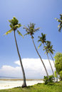 Coconut palm trees on beach Royalty Free Stock Photos