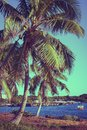 Coconut palm trees. Beautiful tropical landscape, blue sky and sea in the background. Retro, vintage filter. Royalty Free Stock Photo
