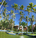 Coconut Palm Trees at a Beautiful Tropical Resort Royalty Free Stock Images