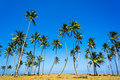 Coconut palm trees and blue sky Royalty Free Stock Images