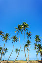 Coconut palm trees and blue sky Stock Photography