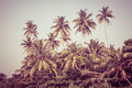 Coconut palm trees and mangrove in tropics as a background Royalty Free Stock Image