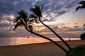 Coconut palm trees at sunset on maui Royalty Free Stock Photo