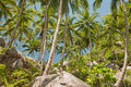 Coconut palm trees in thailand rocks and sky Stock Photo