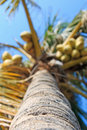 Coconut palm in the tropical beach of cijin island kaohsiung taiwan Royalty Free Stock Photo