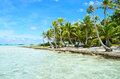 Coconut palms on the beach of a desert island near tahiti in french polynesia in the pacific ocean Royalty Free Stock Images