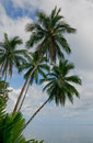 Coconut palms over blue sky background Royalty Free Stock Photos