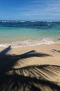 Coconut palms shade on the beach a sandy with caribbean sea in background Royalty Free Stock Photo