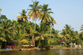 Coconut palms on the shore of the lake. Kerala Stock Images