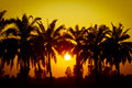 Coconut palms silhouette in tropic on sunset Stock Images