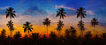 Coconut Palms Silhouetted against a Sunset Sky in Thailand. Royalty Free Stock Photo