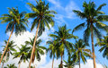 Coconut palms and the sky Royalty Free Stock Photo