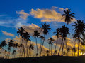 Coconut Palms In The Sunset