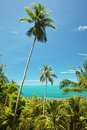 Coconut palms in thailand beach and sea Royalty Free Stock Image