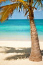 Coconut palms under blue Caribbean sky Stock Image