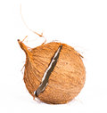 Coconut shell casing Royalty Free Stock Photo