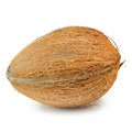 Coconut single hard shelled over the white background Royalty Free Stock Photos