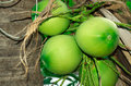 Coconut species one in the tropics Royalty Free Stock Image